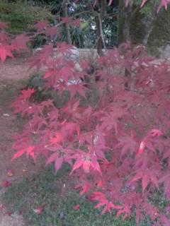 紅葉が色付いて…