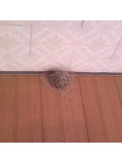 巣作り開始!